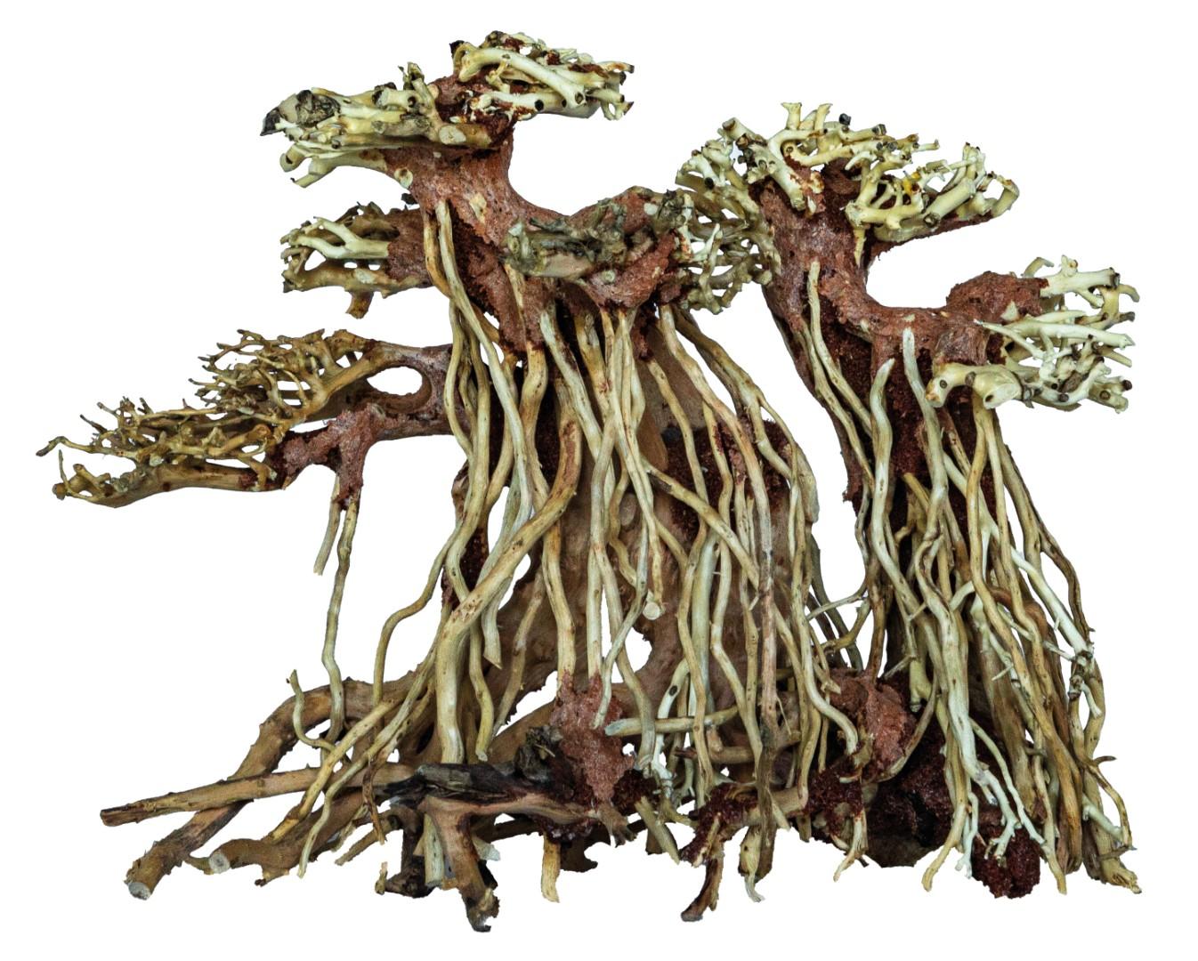 BONSAI TWIN TREE SMALL