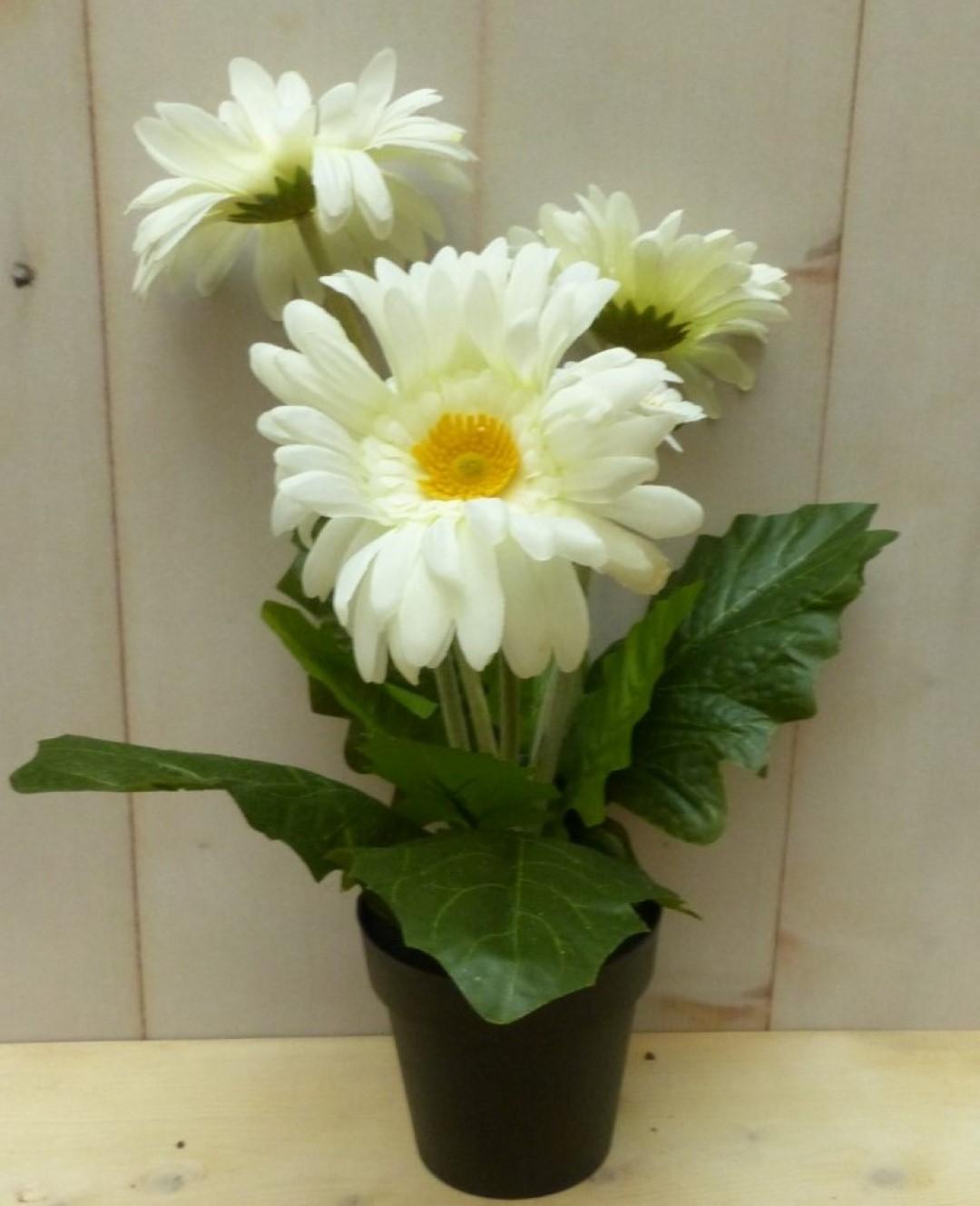Kunstgerbera wit in pot 25 cm