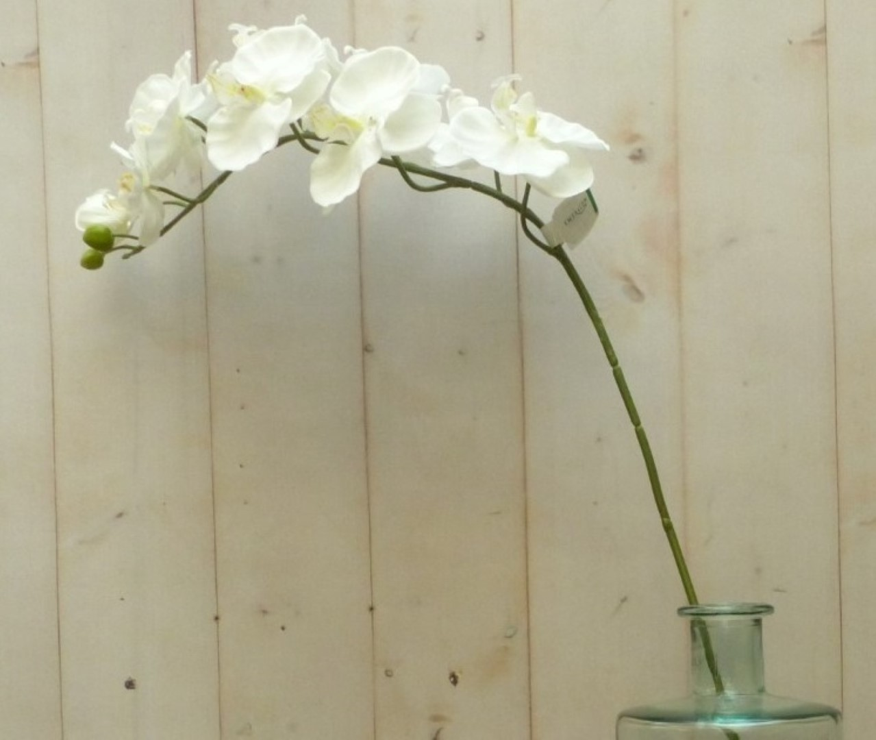 Kunstvlinderorchidee groot op steker wit