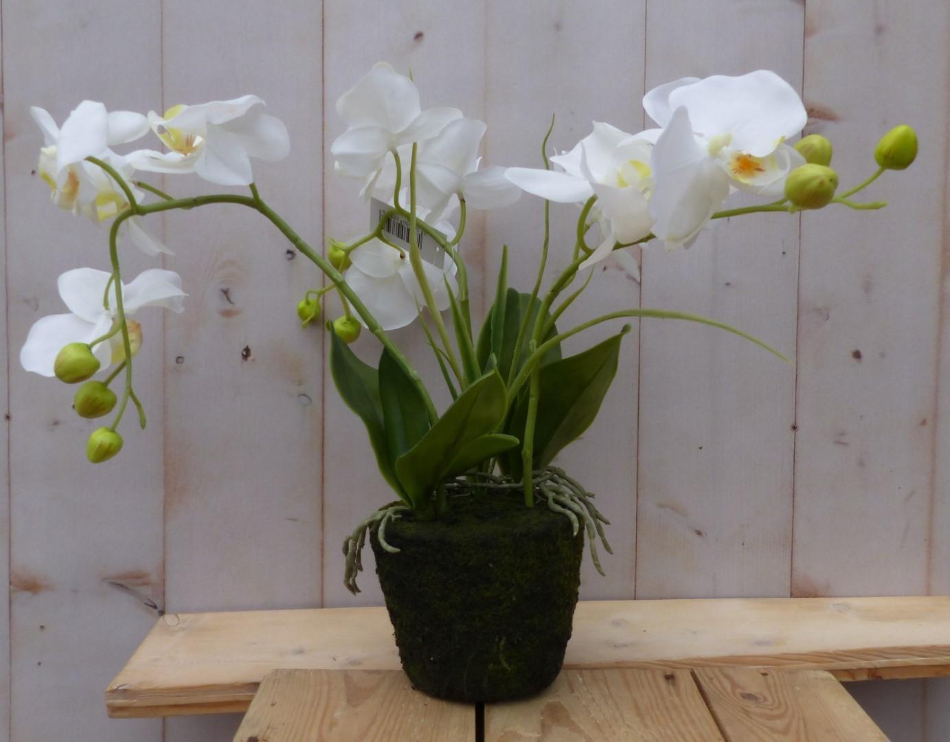 Orchidee phalaenopsis 3 stelen wit 30 cm