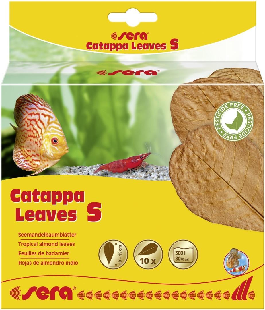 Catappa Leaves S 10 - 15 cm