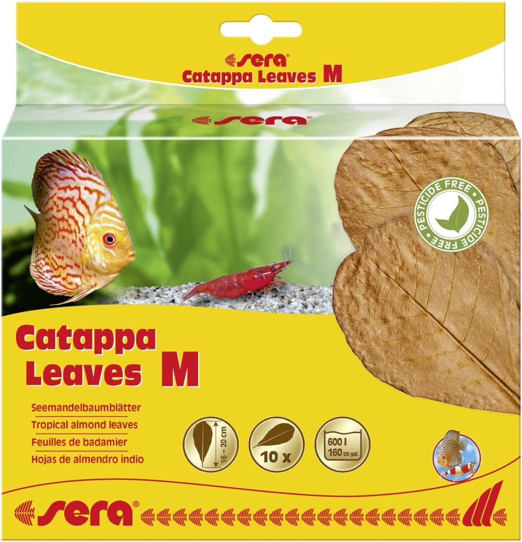 Catappa Leaves M 16 - 20 cm