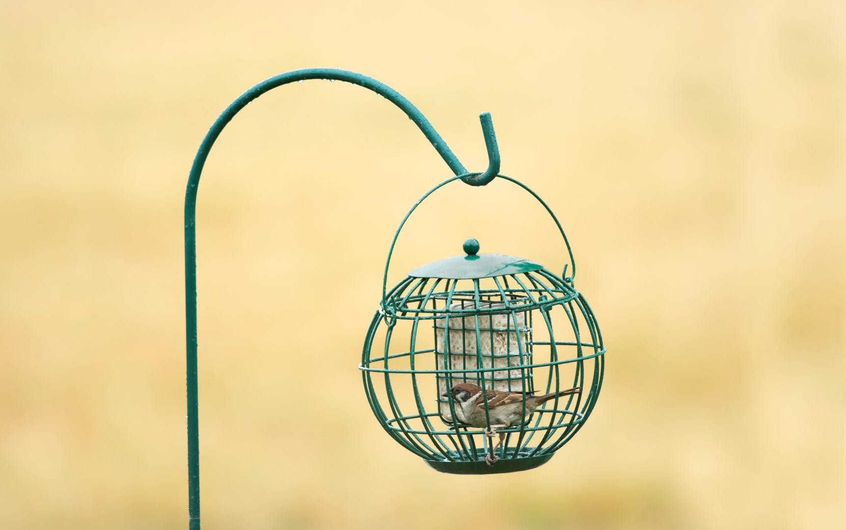 Vogelvoer Vetblokhouder London CJ Wildlife