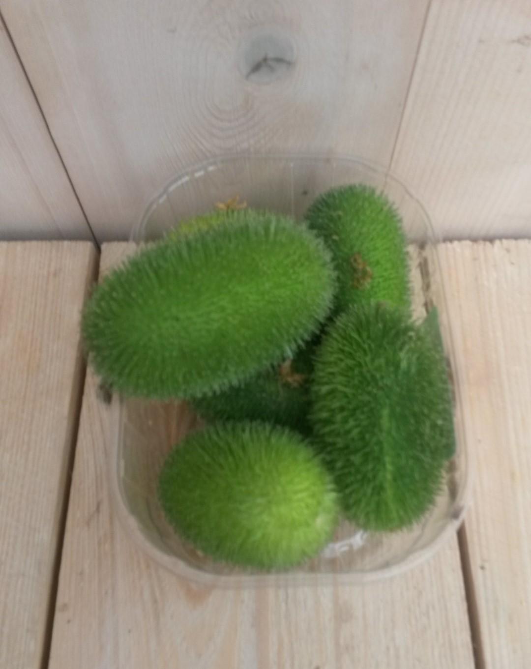 Decoratievruchten groen