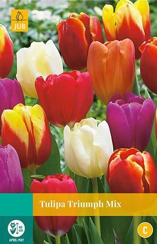 Tulipa Triumph mix 8 bollen