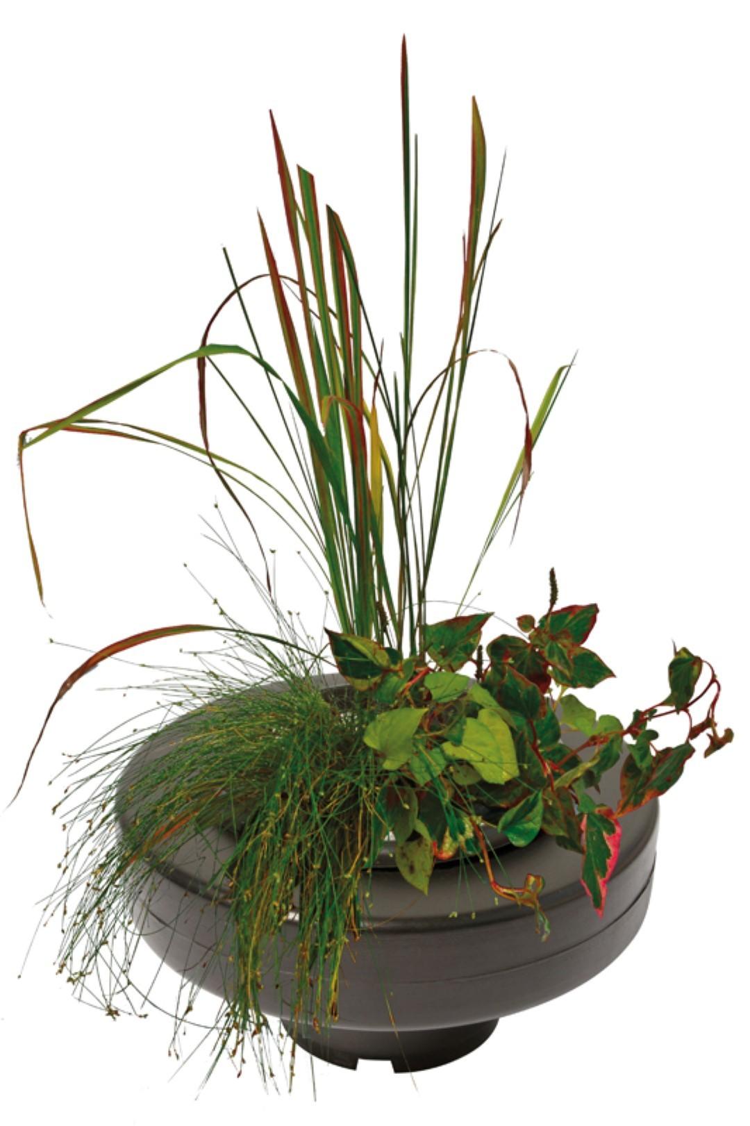Floating Plant Basket diameter 30 Cm vijver