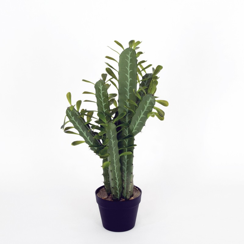 Cactus Window Rock M met pot