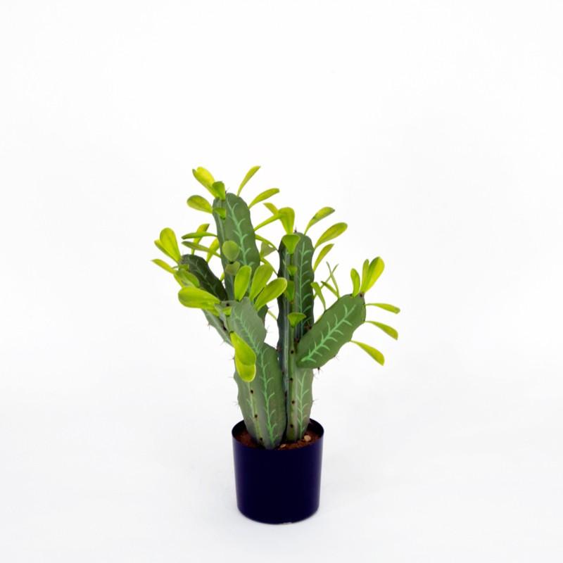Cactus Teec Nos Pos M met pot