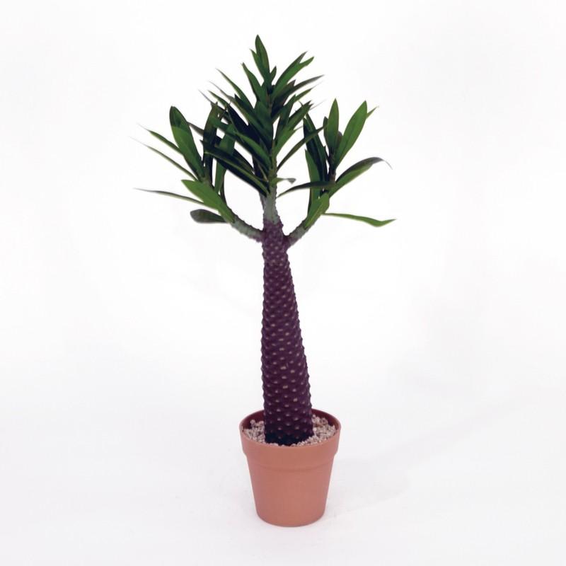 Euphorbia Wide Ruin met pot