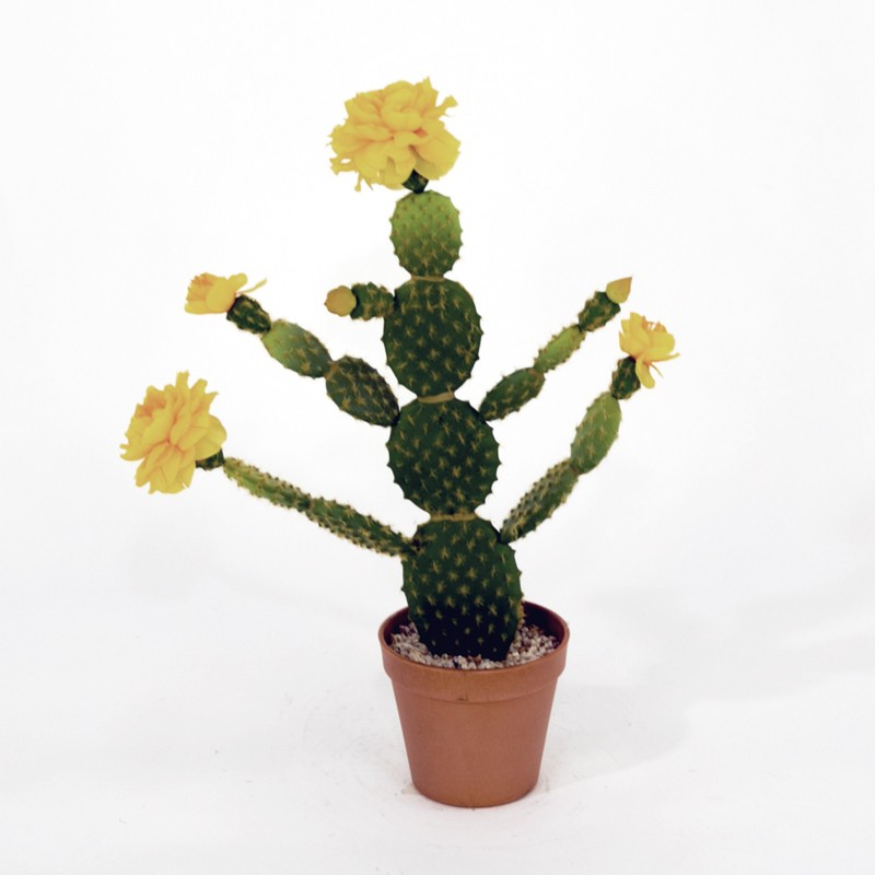 Cactus Sun Valley met pot
