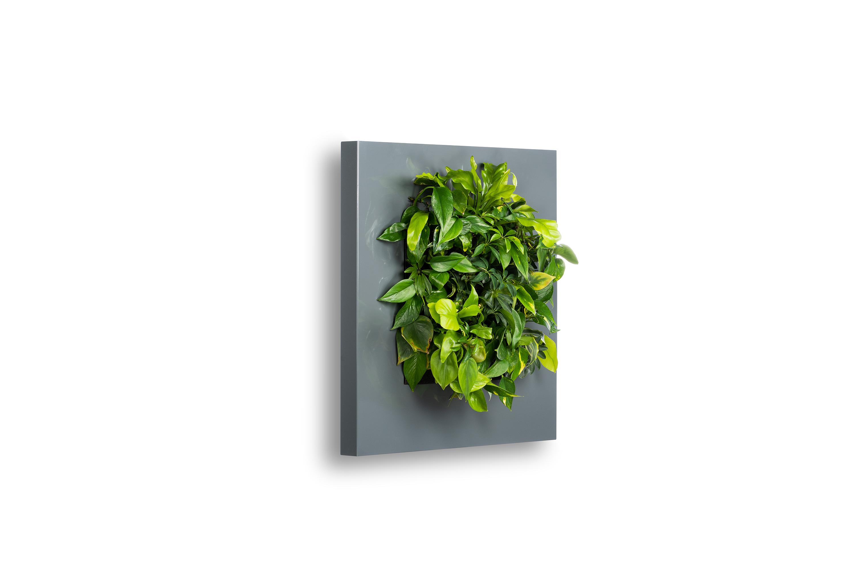 Levende Plantenschilderij LivePicture 1 Antraciet 72 x 72 x 7 cm incl. planten