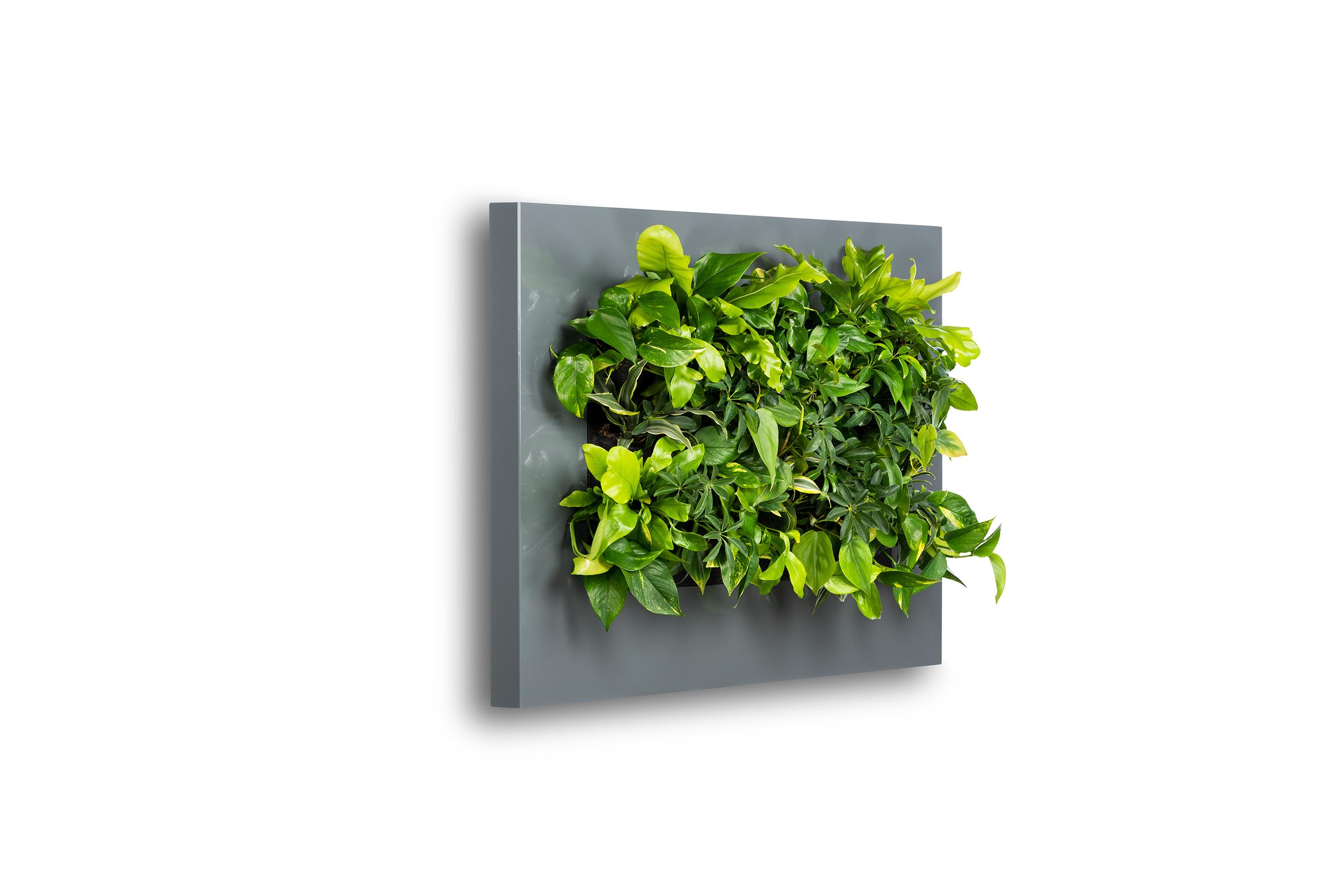 Levende Plantenschilderij LivePicture 2 Antraciet 112 x 72 x 7 cm incl. planten