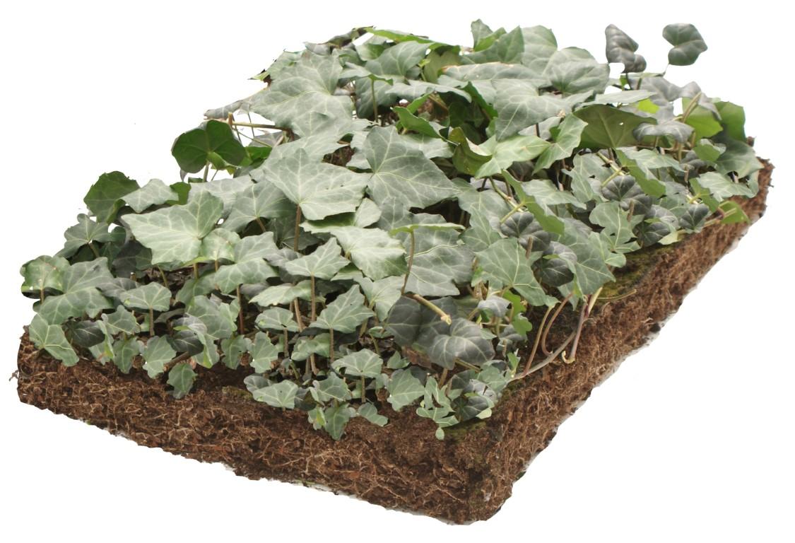 Plantenmat Hedera 57x38 cm