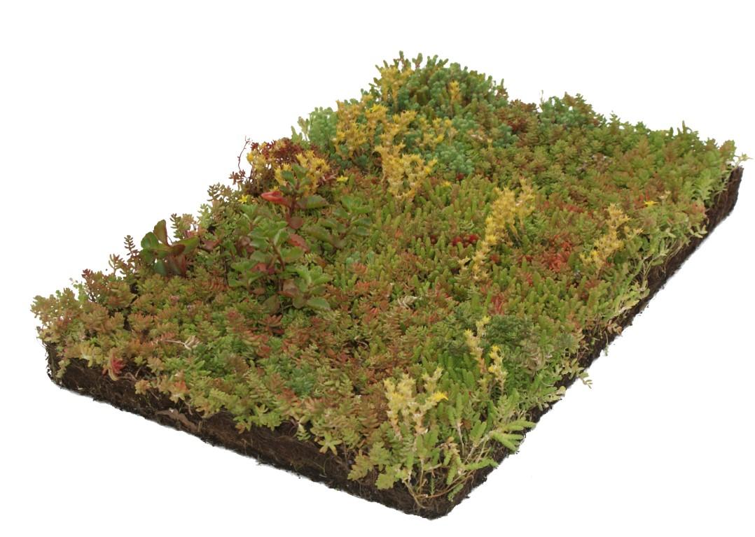 Plantenmat Sedum 57x38 cm
