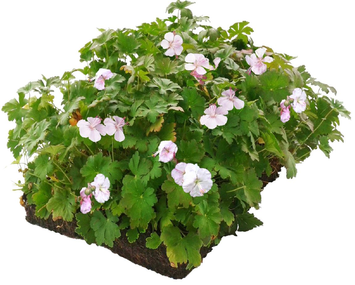 Plantenmat Geranium 57x38 cm
