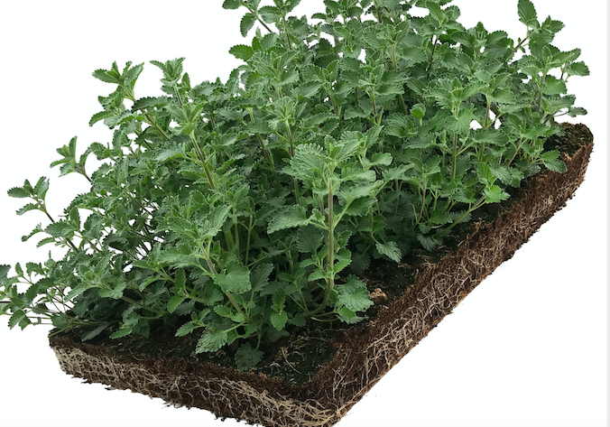 Plantenmat Nepeta 57x38 cm