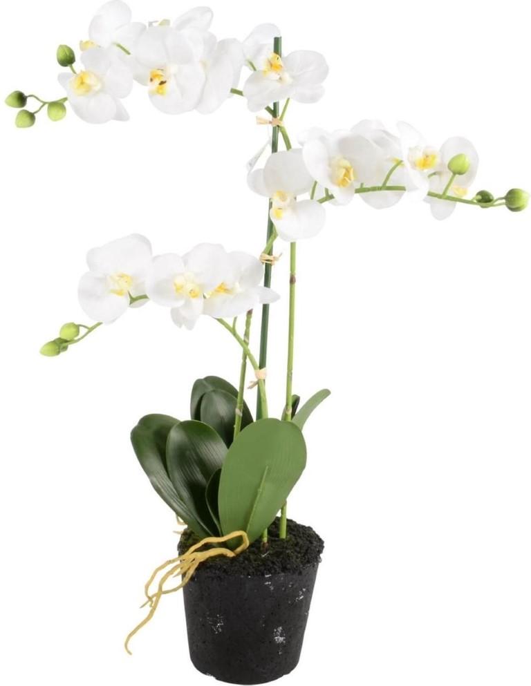 Orchidee 3-tak wit H55cm