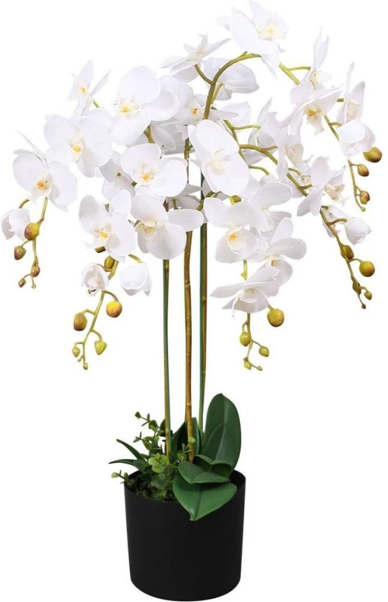 Orchidee meertak wit H88cm