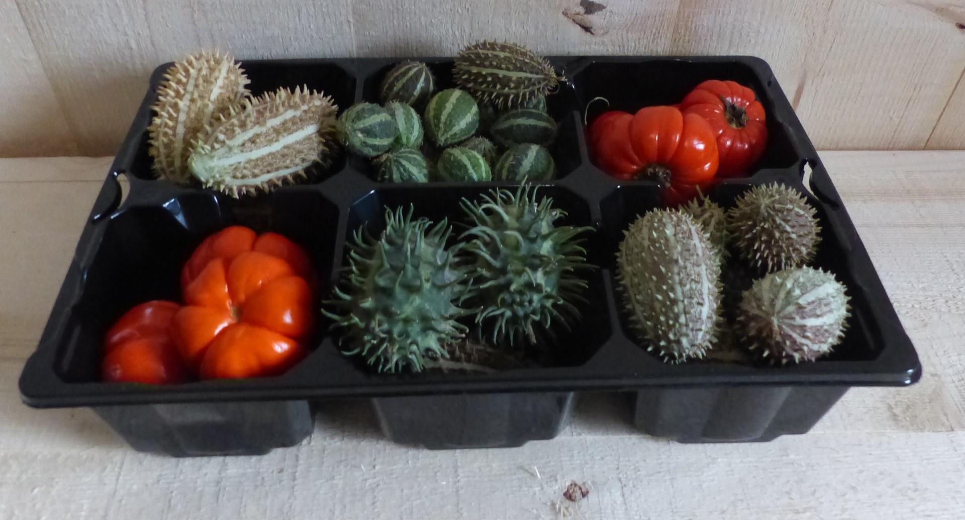Decoratief fruit herfst verschillende soorten