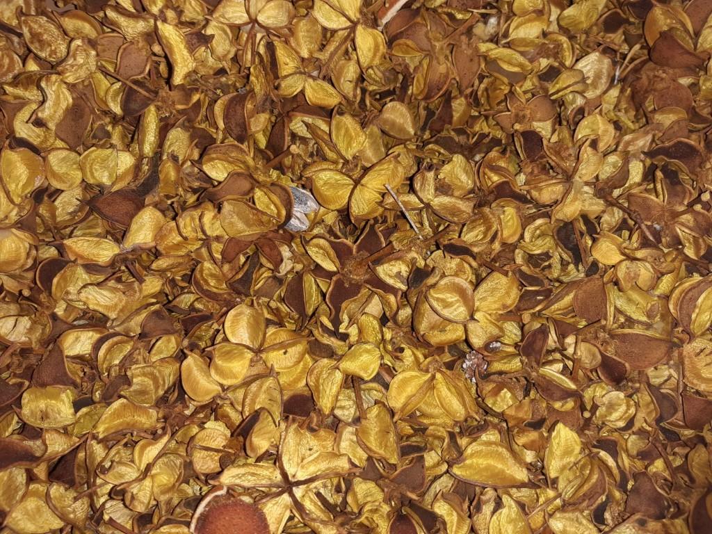 Cotton pods geel 1 schep