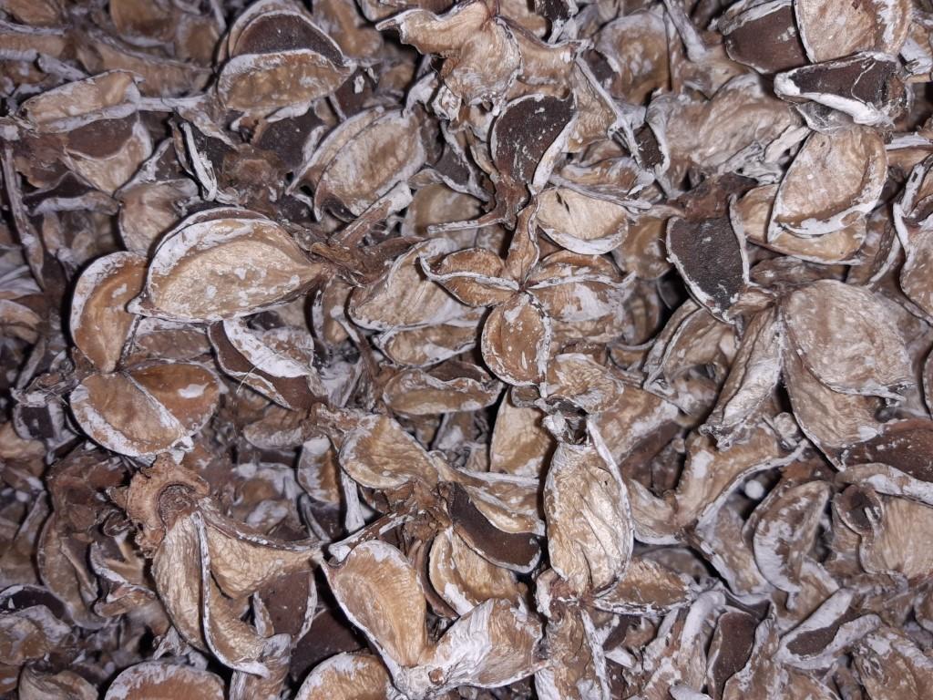 Cotton pods white wash 1 schep