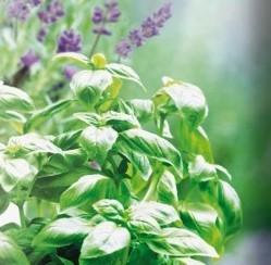 Lavendel/Kruiden/Moestuin grond aarde 10 liter