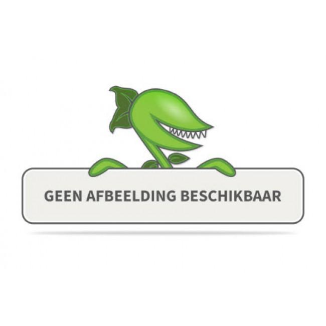 Kant & klaar haag met hardhout bak groot Hedera helix Woerner 100 cm Mobilane
