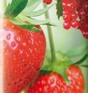 Fruit/Kleinfruit/Moestuin grond aarde 40 liter