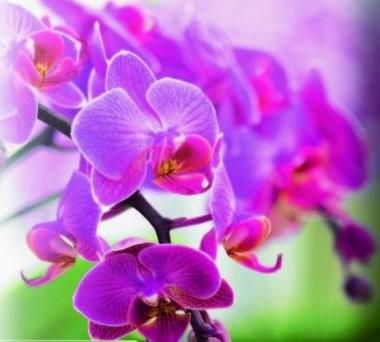 Potgrond Orchideeën aarde grond 10 liter