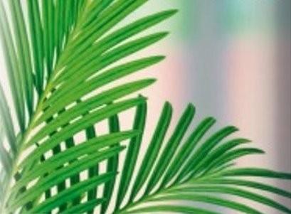 Potgrond Palmen/Kamerplanten aarde grond 10 liter