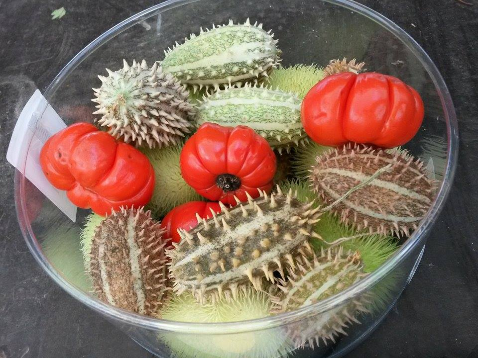 Sierfruit diverese soorten siervruchten per pakje XL