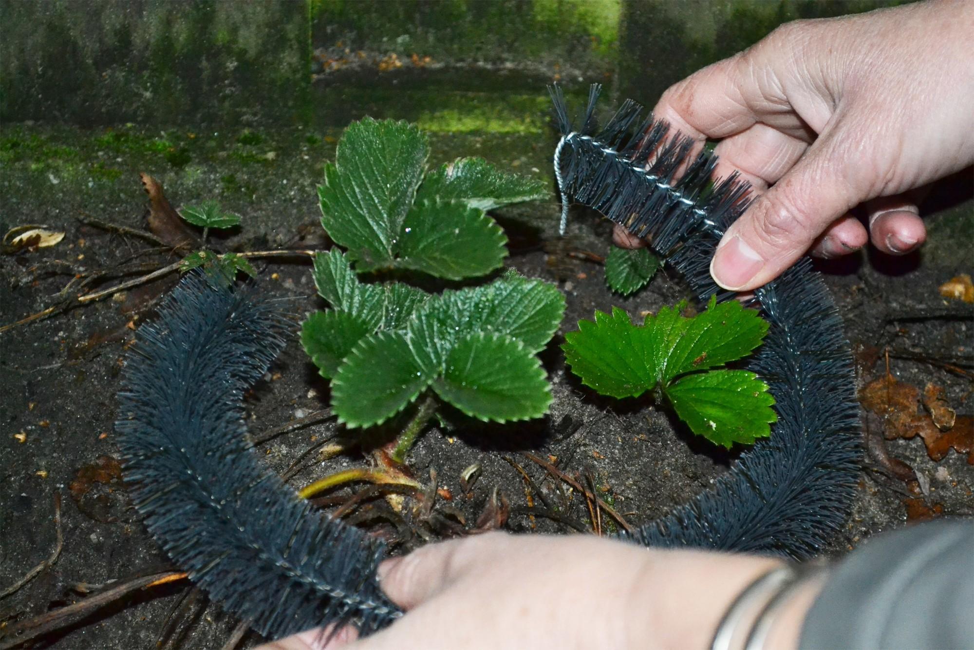 Slakkenborstels 4 borstels op een lengte van 100cm