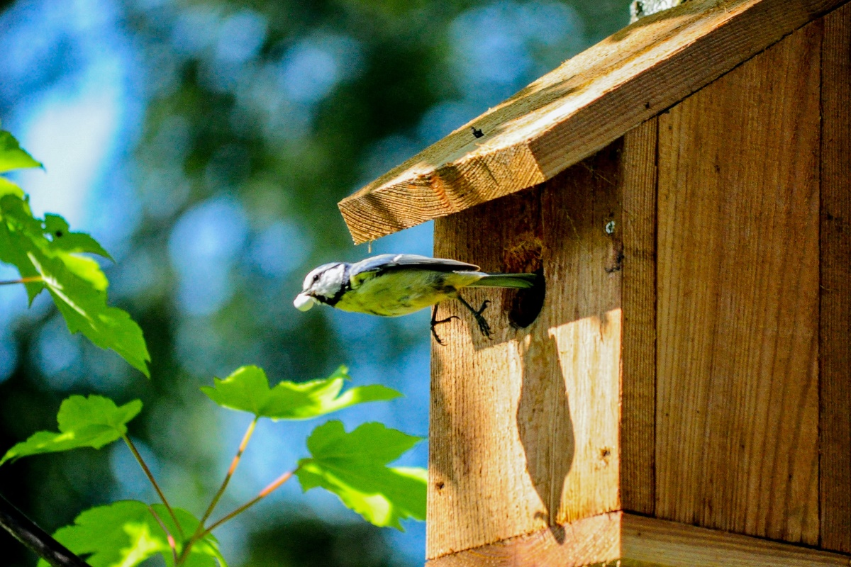 Vogel- en voederhuisjes